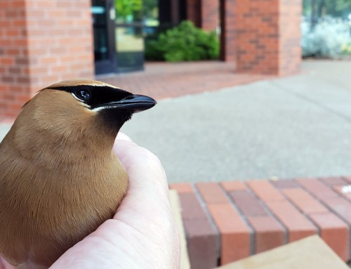 A bird in the hand…